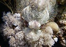 Snorkelen Hurghada, Rode Zee, Egypte. Snorkelen en duiken op de mooiste plaatsen in Hurghada, Rode Zee, Egypte met Seahorse Divers, Nederlandse PADI duikschool en PADI duikcentrum. Snorkelen in Hurghada