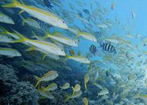 Duiken in Hurghada met Seahorse Divers