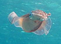 Duiken in Hurghada met Seahorse Divers, Gota Abu Ramada