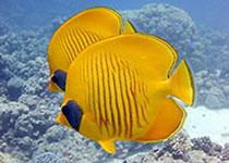 Snorkelen Hurghada, Rode Zee, Egypte. Snorkelen en duiken op de mooiste plekken in Hurghada, Rode Zee, Egypte met Seahorse Divers, Nederlandse PADI duikschool en PADI duikcentrum. Snorkelen in Hurghada.