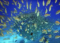 Veelgestelde vragen over duiken. Duiken in Hurghada, Rode Zee, Egypte. Seahorse Divers, Nederlands PADI duikcentrum en Nederlandse PADI duikschool in Hurghada, Rode Zee, Egypte