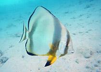 Duiken in Hurghada met Seahorse Divers, Koraalduivels