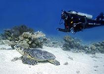 Prijzen Duiken Hurghada Egypte, Prijs PADI Open Water duikcursus Hurghada, Rode Zee, Egypte, Kosten Duiken Hurghada, Rode Zee, Egypte, Prijzen Duiken Hurghada Egypte, kosten Duikcursus Hurghada Egypte. Prijs Padi Open water diver cursus Hurghada.