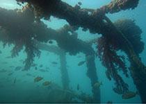 Duikvakantie Hurghada, Rode Zee, Egypte. Tips voor je duikvakantie Hurghada, Rode Zee, Egypte. Duiken in Hurghada met Seahorse Divers, Nederlands PADI duikcentrum en Nederlandse PADI duikschool voor geslaagde duiken tijdens je duikvakantie in Egypte. PADI Duikopleidingen, PADI duikcursus, dagelijks duiken, wrak duiken, introductie duiken en snorkelen. Wrak Belina