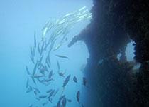 Duiken in Hurghada met Seahorse Divers, Nederlands PADI duikcentrum en PADI duikschool. Rode zee, Egypte.