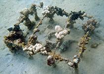 Wrakduiken in Hurghada met Seahorse Divers, Wrak Belina