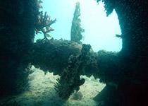 Diving in Hurghada, Daily diving in Hurghada, PADI Diving center and PADI Diving school, for the best diving during your diving holiday in Hurghada, Egypt, Scuba Diving in Hurghada, Red Sea, Egypt
